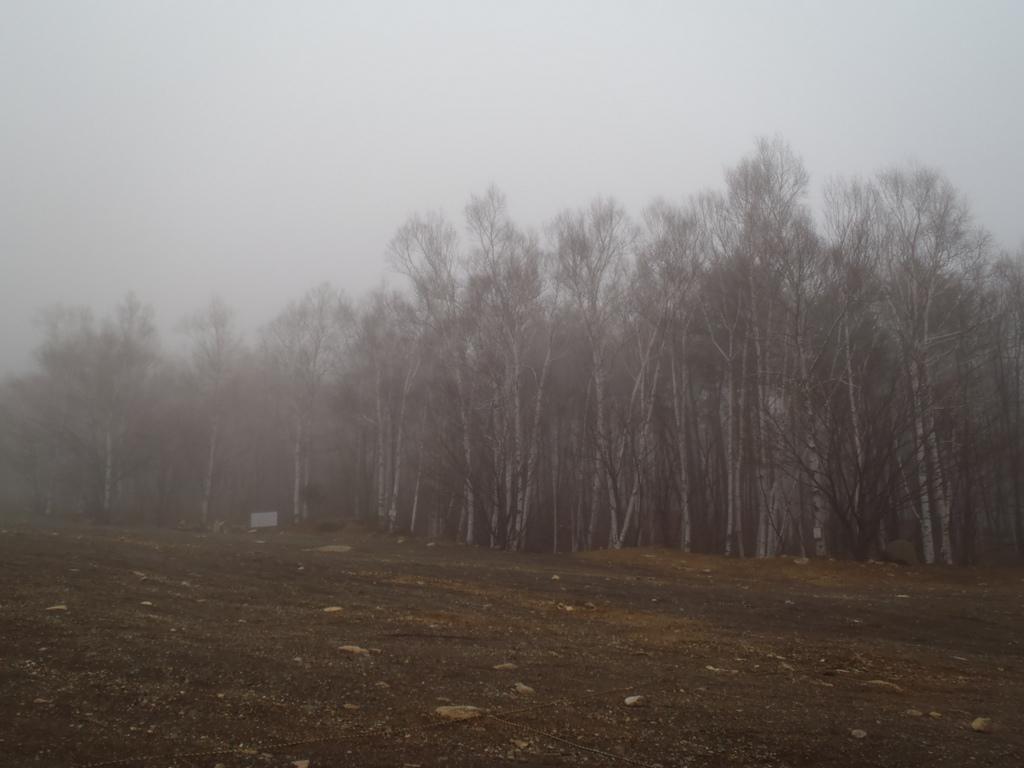 朝もやがかかる森